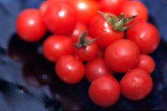Tomates de cereza escogidos frescos Imagenes de archivo