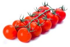 Tomates de cereza frescos Imagen de archivo libre de regalías
