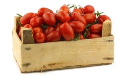 Tomates de cereza italianos frescos en la vid Imágenes de archivo libres de regalías