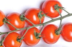 Tomates de cereza maduros derecho del jardín Foto de archivo libre de regalías