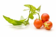 Tomates de cereza muy frescos Foto de archivo libre de regalías