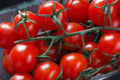 Tomates de cereza orgánicos Imagen de archivo