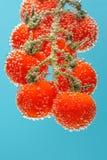 Tomates de cereza rojos maduros imagen de archivo libre de regalías
