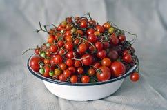 Tomates de cereza rojos maduros frescos en una placa blanca, cosecha de cosecha propia del otoño - fondo - trayectoria de recorte Imagen de archivo libre de regalías