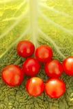 Tomates de cereza y hoja de la col Fotografía de archivo
