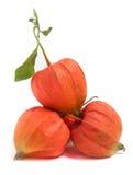 Tomates de cosse ou physalis avec la feuille d'isolement sur le fond blanc Image libre de droits