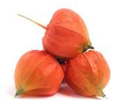 Tomates de cosse ou physalis sur le fond blanc photo libre de droits