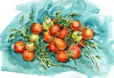 Tomates de la acuarela Imagen de archivo libre de regalías
