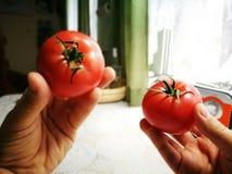 Tomates de la frambuesa roja Foto de archivo libre de regalías