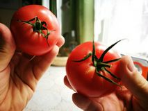 Tomates de la frambuesa roja Fotografía de archivo