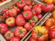 Tomates de la herencia en el mercado Fotografía de archivo