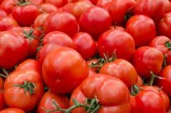 Tomates de la materia orgánica en el mercado de los granjeros jerusalén imagen de archivo