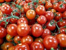 Tomates de la vid Fotografía de archivo libre de regalías
