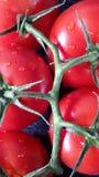Tomates de la vid Fotografía de archivo