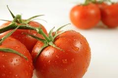 Tomates de la vid cerca y lejos Foto de archivo libre de regalías
