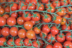 Tomates de la vid de la cereza Imagen de archivo libre de regalías