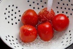 Tomates de lavagem Fotos de Stock
