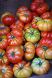 Tomates de maturité différente images stock