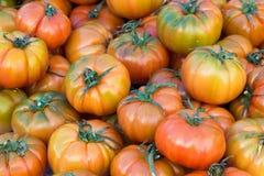 Tomates de Pachino Imagem de Stock