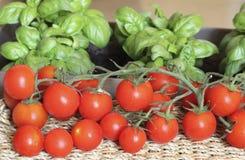 Tomates de Pachino e manjericão Genoese Fotografia de Stock