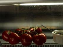 Tomates de piment sur une branche dans la belle lumière sur le vent photo libre de droits
