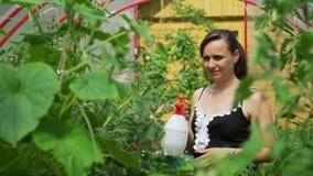 Tomates de riego de la mujer joven con un arma de espray almacen de metraje de vídeo