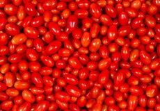 Tomates de Roma Foto de archivo libre de regalías