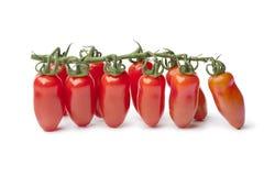Tomates de San Marzanoâs do bebê em uma videira imagens de stock