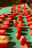 Tomates de secagem Imagens de Stock Royalty Free