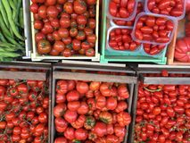 Tomates de todos os pomodoros de Italia dos tipos Imagem de Stock