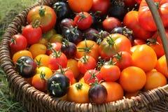 Tomates de variété d'héritage dans les paniers sur la table rustique Tomate colorée - rouge, jaune, noir, orange Légume de récolt photos libres de droits