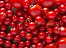 Tomates de variedades diferentes Fundo vermelho dos tomates dos tomates Conceito saudável do alimento dos tomates frescos Imagens de Stock