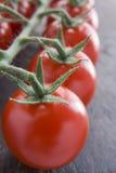 Tomates de vigne Photos stock