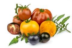 Tomates decorativos da cor alaranjada, vermelha e roxa com l verde fotos de stock royalty free