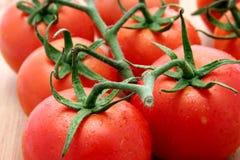 Tomates del braguero Fotografía de archivo libre de regalías