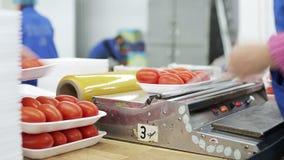 Tomates del embalaje en envases de comida Trabajo rápido, trabajo manual