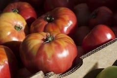 Tomates del mercado de Farmer's Foto de archivo