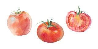 Tomates del rojo de la acuarela Imagen de archivo libre de regalías