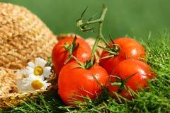 Tomates del verano Fotografía de archivo libre de regalías