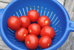Tomates do cocktail Foto de Stock