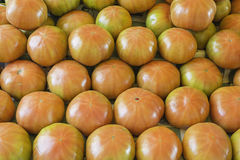 Tomates do grupo Fotografia de Stock