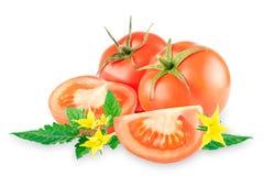 Tomates do grupo com folhas em um fundo branco imagem de stock royalty free