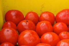 Tomates do verão Foto de Stock