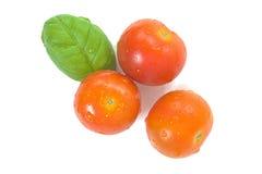 Tomates dos produtos orgânicos e folhas da manjericão isoladas Imagem de Stock