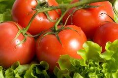Tomates e alface Imagens de Stock