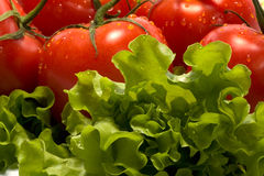 Tomates e alface Fotografia de Stock Royalty Free