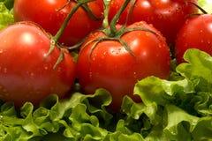 Tomates e alface Foto de Stock Royalty Free