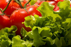 Tomates e alface Imagens de Stock Royalty Free