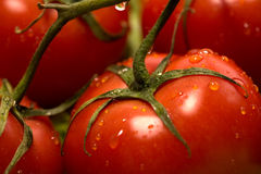 Tomates e alface Imagem de Stock