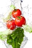 Tomates e alface na água do respingo Fotografia de Stock Royalty Free